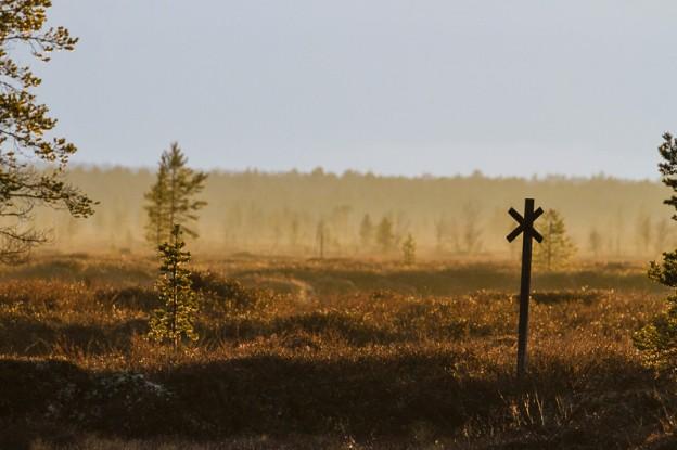 Abendstimmung in Finnland Foto: Thomas Hafen